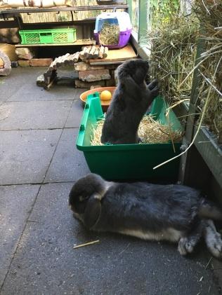Kaninchen 2.1